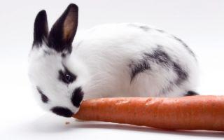 Кролик из-под куста
