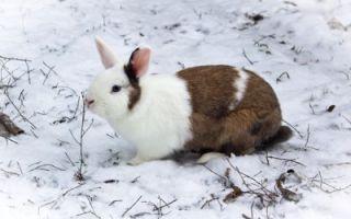 Кроличье зимовье