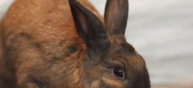 Как стачиваются зубы у кролика