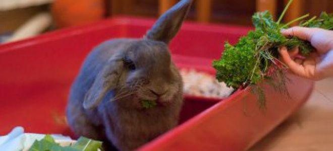 Общество помощи кроликам Санкт-Петербурга «Кроль-команда»