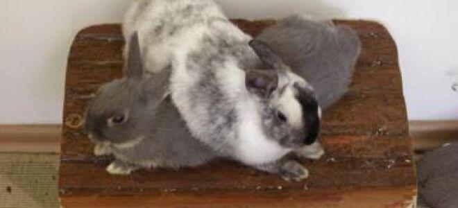 Кроликам нужна подходящая компания!