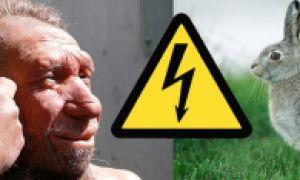 Неандертальцы исчезли из-за кроликов?
