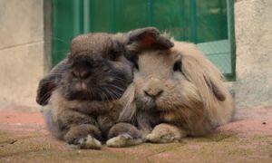 Добро пожаловать в наш блог о кроликах!