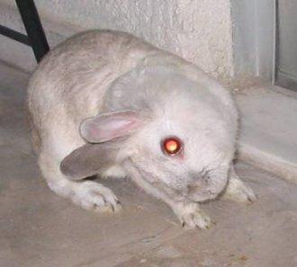 headtiltrabbit_yourpetshealth.co.uk