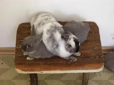 Кроликам нужен сородич