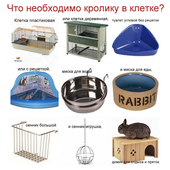 Как обустроить клетку кролика?