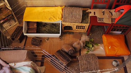 Пример вольера для кроликов